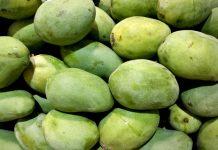 kandungan vitamin buah mangga